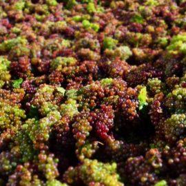Zo zákulisia výroby vína LAHOFER