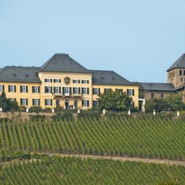 Šľachtit(eľ)ské aféry 4: Víno kráľov a kráľ vín a.k.a. Rizling rýnsky